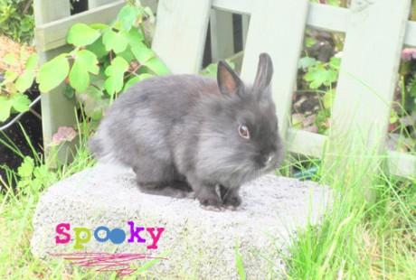 Spooky Bunny